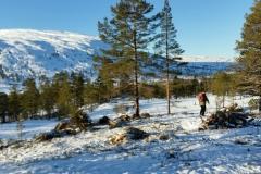Før bygging av hytte tomt 43 (Nerland)