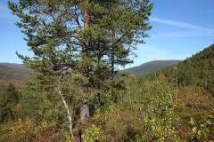 tomt_11-20140915_0088