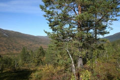 tomt_11-20140915_0089