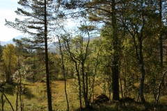 tomt_25-20140915_0189