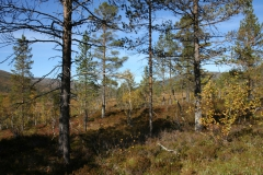 tomt_27-20140915_0197