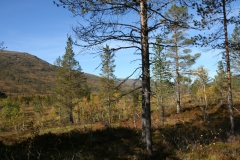 tomt_27-20140915_0198