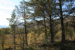 tomt_27-20140915_0201