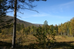 tomt_31-20140915_0231
