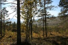 tomt_31-20140915_0235