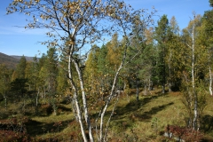 tomt_32-20140915_0238