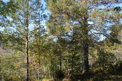 tomt_36-20140915_0265