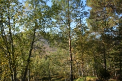 tomt_36-20140915_0266