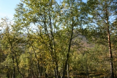 tomt_36-20140915_0267