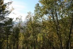 tomt_36-20140915_0268