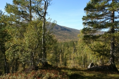 tomt_38-20140915_0279
