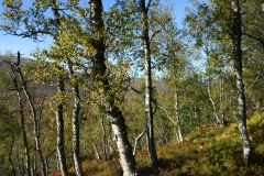 tomt_39-20140915_0284