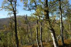 tomt_39-20140915_0285